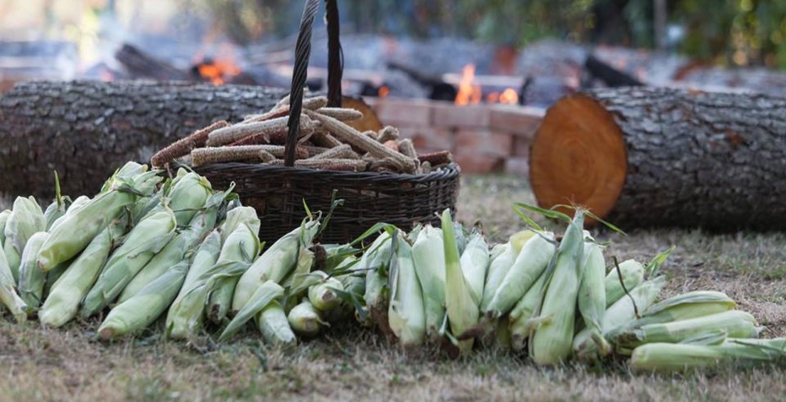 Ljeto u Vukovini uz pečenike, radionicu, film...