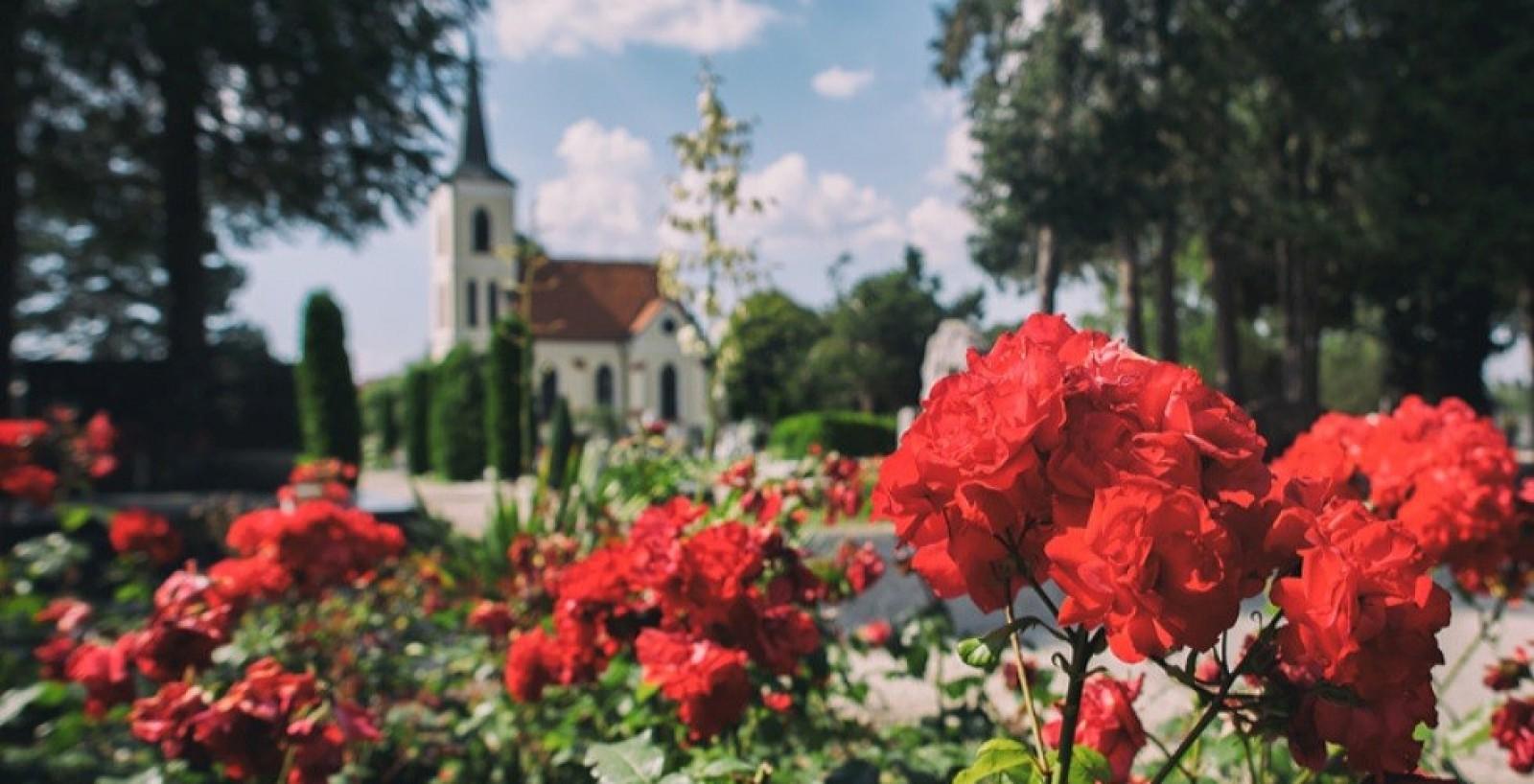 Festival ruža