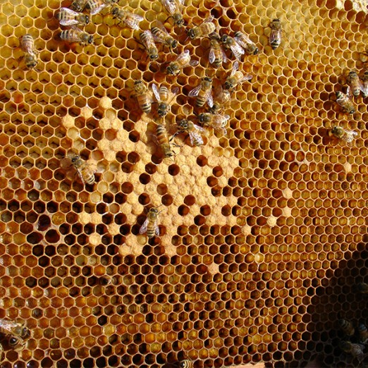 """Pčelarska udruga """"Turopolje"""""""